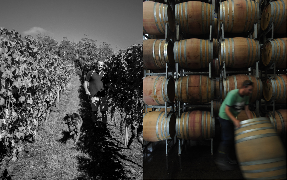 Peter Caldwell vineyard barrels